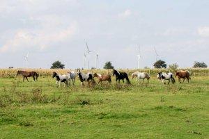 Pferde vermitteln neue Perspektiven