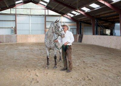 Das Pferd als Begleiter