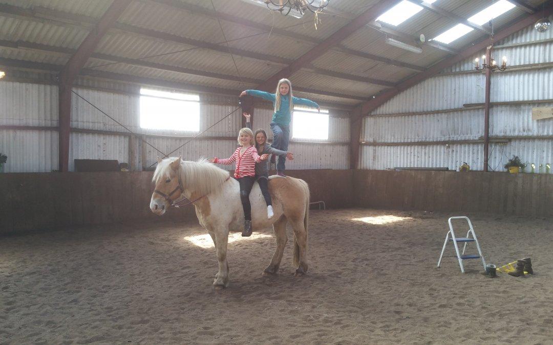 Pferde sind wie ein Spiegel